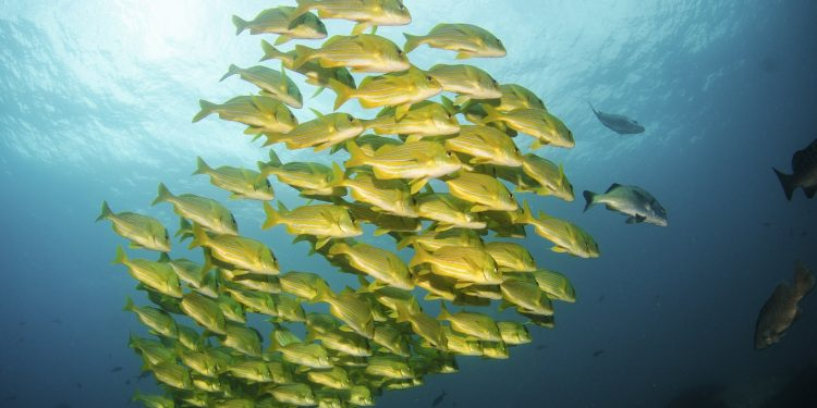 Brief: Fisheries and the Post-2020 Global Biodiversity Framework